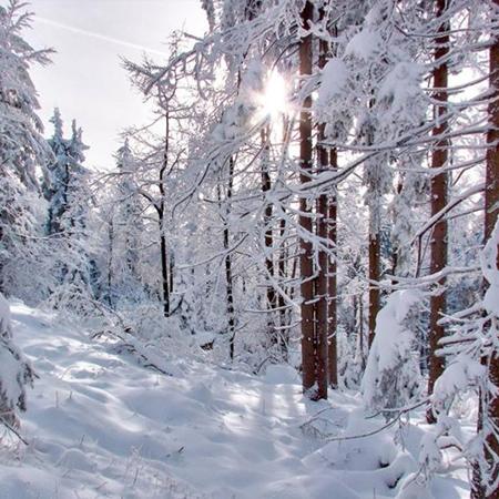 冬天雪景醉美 感受白色世界 VR全景