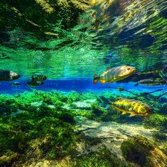 带你潜水进入海底世界 -VR全景